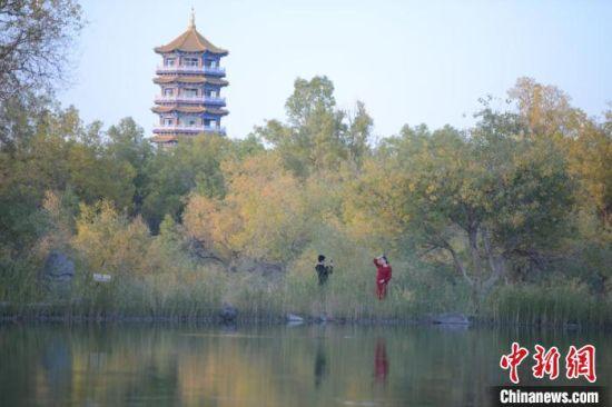 图为胡杨林风景如画。 李斌龙 摄