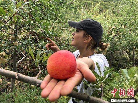 """2021年9月中旬,甘肃省迭部县境内,加措曼向记者展示刚从自家果树上摘下来的""""黄元帅""""苹果。 王牧雨  摄"""