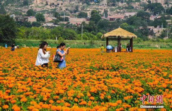 """据了解,崆峒山大景区将于9月份举办""""菊韵崆峒""""为主题的崆峒山金秋菊花节。徐振华 摄"""