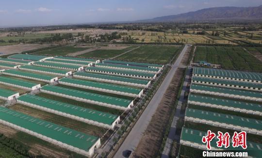 图为养殖场。 钟欣 摄