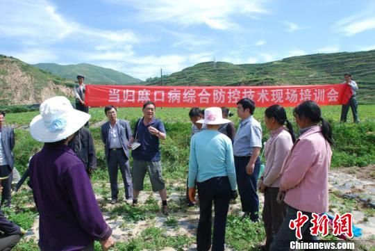 图为甘肃省农科院专家进行当归病害防治训练。 钟欣 摄