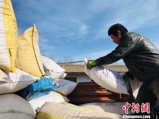 图为当地农户将装好的藜麦抬放至大卡车。 闫姣 摄