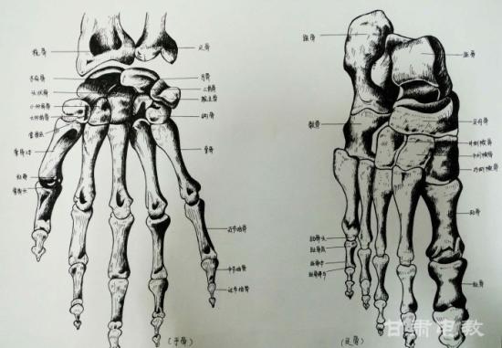 药大学举办首届解剖学绘图大赛