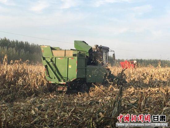 兰州石化景泰农场机械化操作助力农户秋收工作