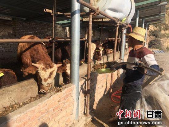 """甘肃临洮""""六位一体""""扶贫促农户""""不等不靠""""致富"""