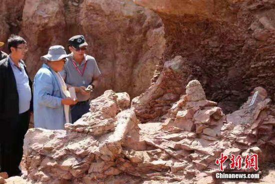 甘肃永靖县再次发现巨型恐龙骨骼