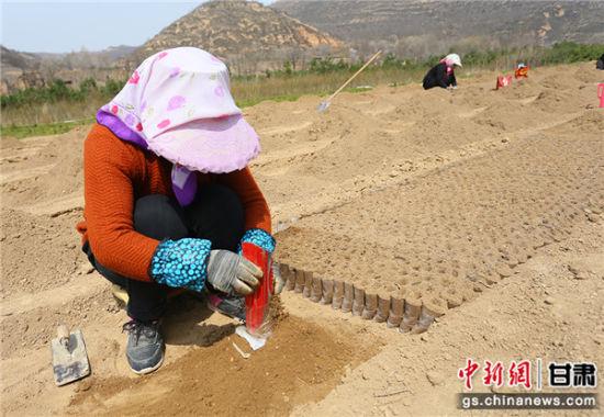 甘肃黄土塬农户育苗如护儿:悉心培育增绿致富